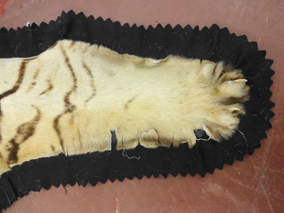 Vintage Tiger Skin Rug with Head & Paws - 5