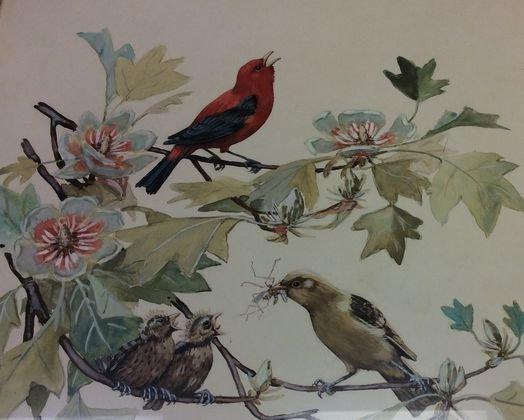 Elisabeth Paxton Oliver, Watercolor, Birds.
