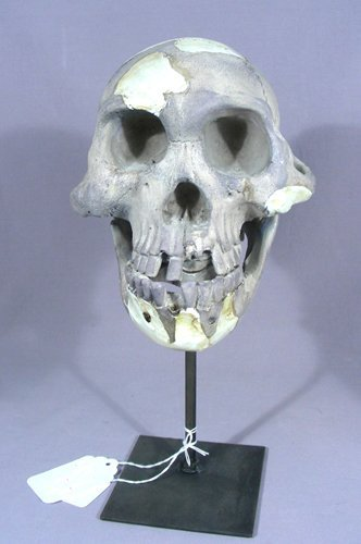 COMPOSITION AND METAL SCULPTURE OF SKULL