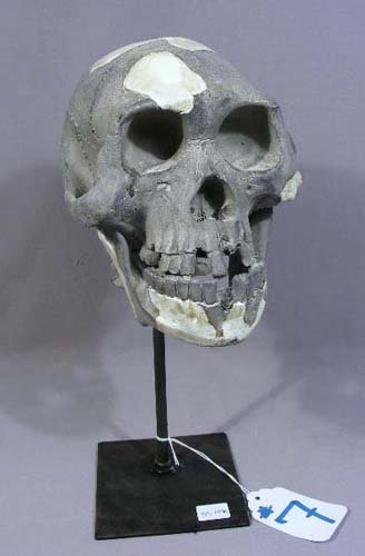 COMPOSITION SKULL MOUNTED ON METAL STAND