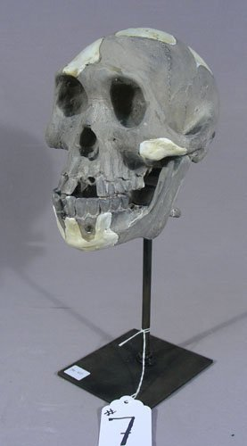 COMPOSITION SKULL MOUNTED ON METAL BASE