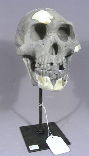 COMPOSITION SCULPTURE OF SKULL AND METAL BASE