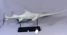 Composition And Metal Sculpture Of Sawfish