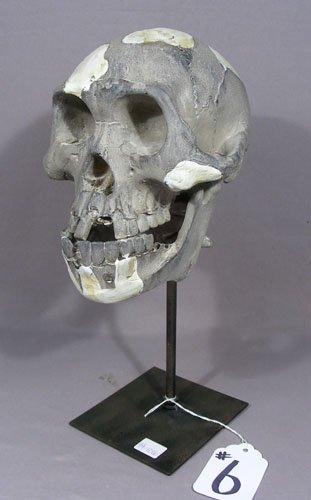 HEAVY COMPOSITION SKULL ON METAL STAND