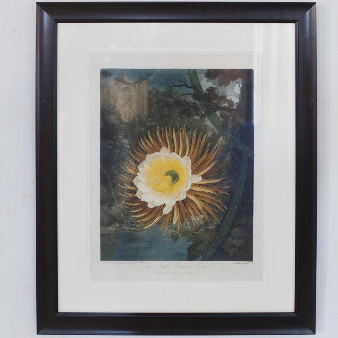 "Robert Thornton ""The Night Blooming Cereus"""