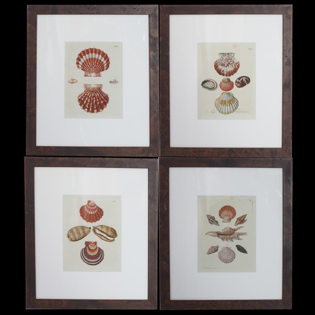 Antique Shell Color Lithographs