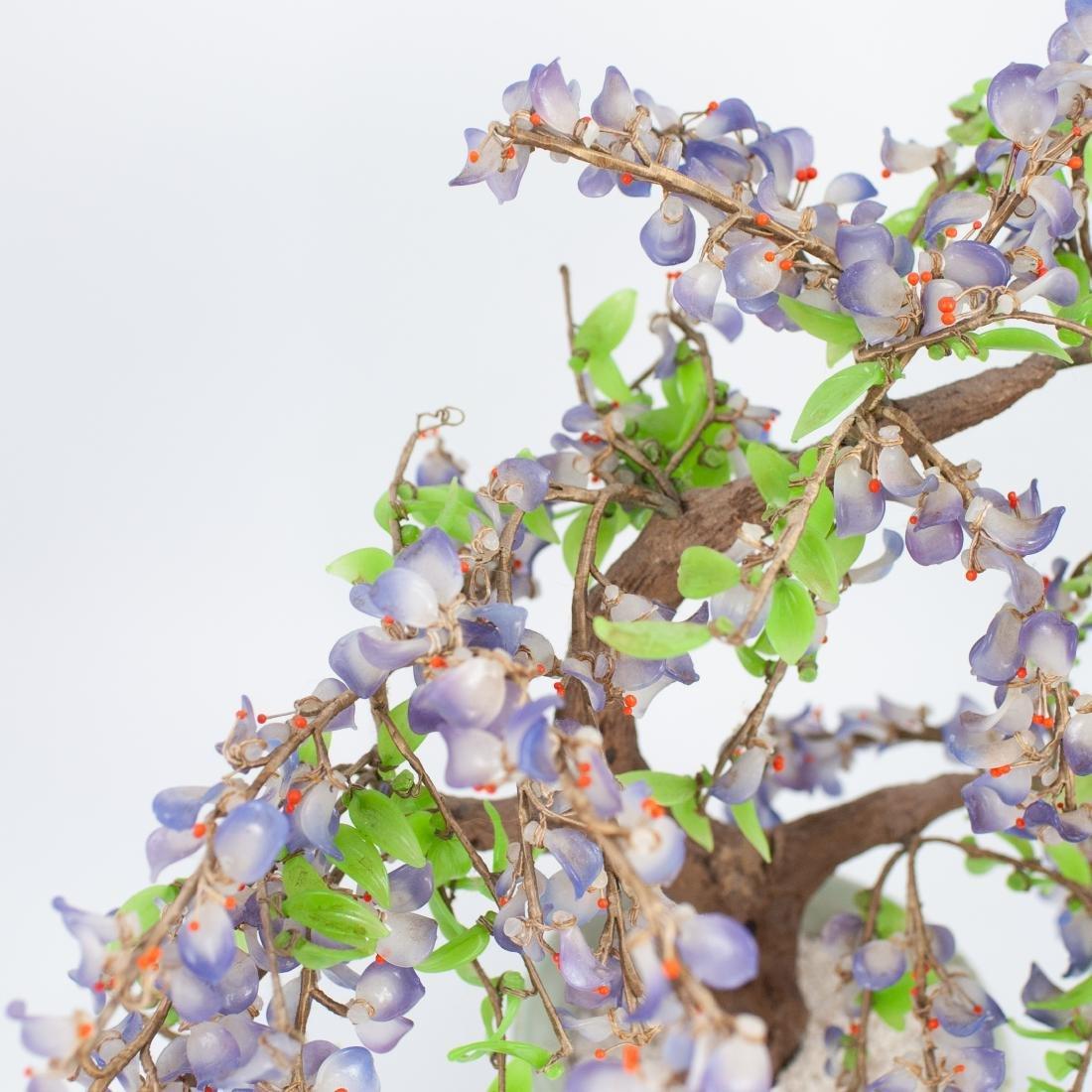 Chinese Jade Tree - 4