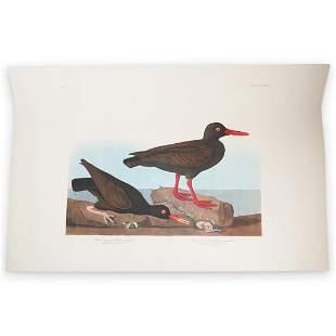 John James Audubon (American, 1785-1851) Amsterdam