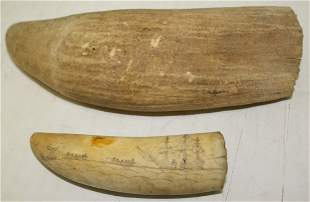 TWO 19TH C WHALES TEETH. ONE HAS SCRIMSHAW SCENE.