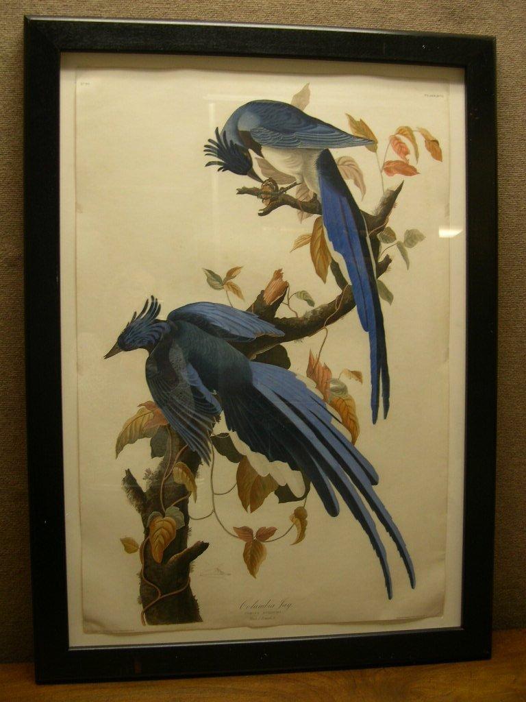 "John J. Audubon Engraving ""Columbia Jay"" Havell 1831"