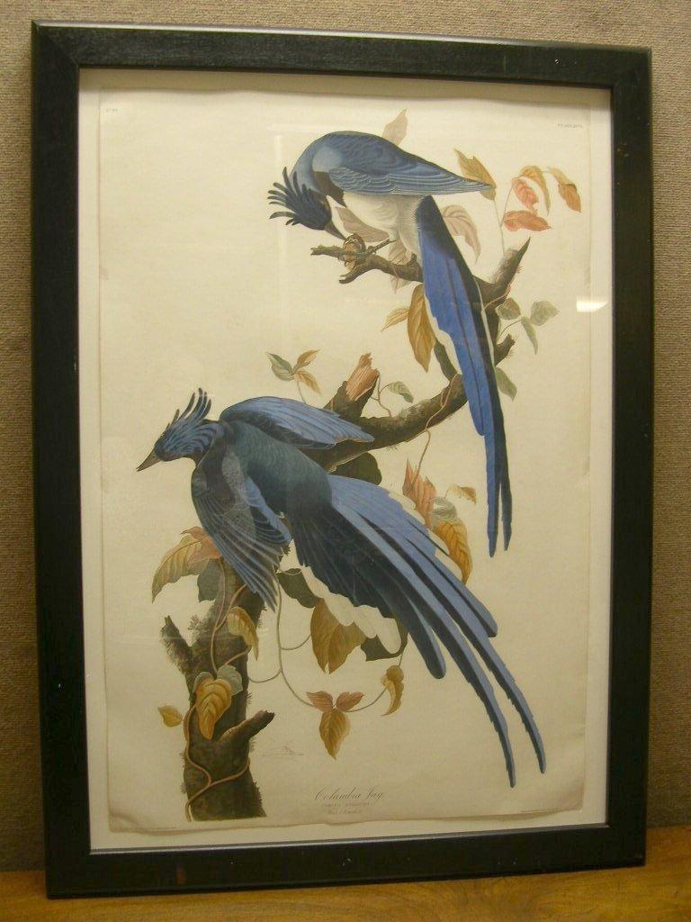 John J Audubon Engraving & Aquatint Columbia Blue Jay