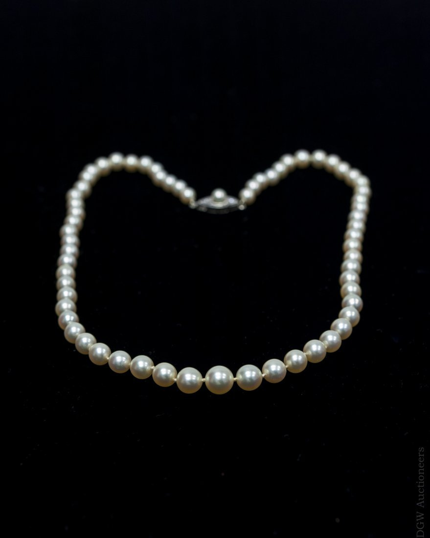 Pearl Choker Necklace. - 2