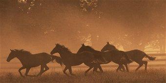 The Sprint for Home ~ Robert Dawson