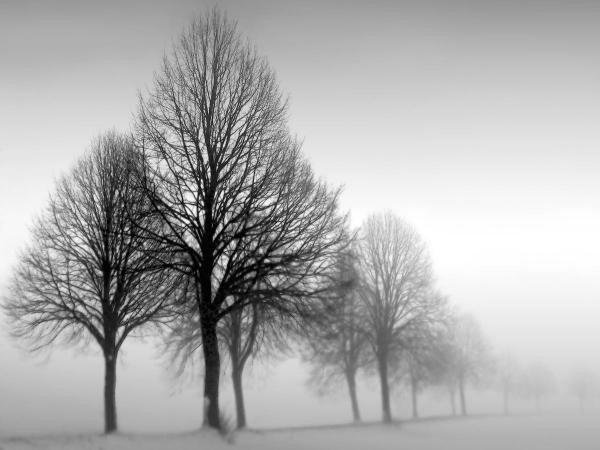 """3G: ILONA WELLMANN""""WINTER TREES III"""""""