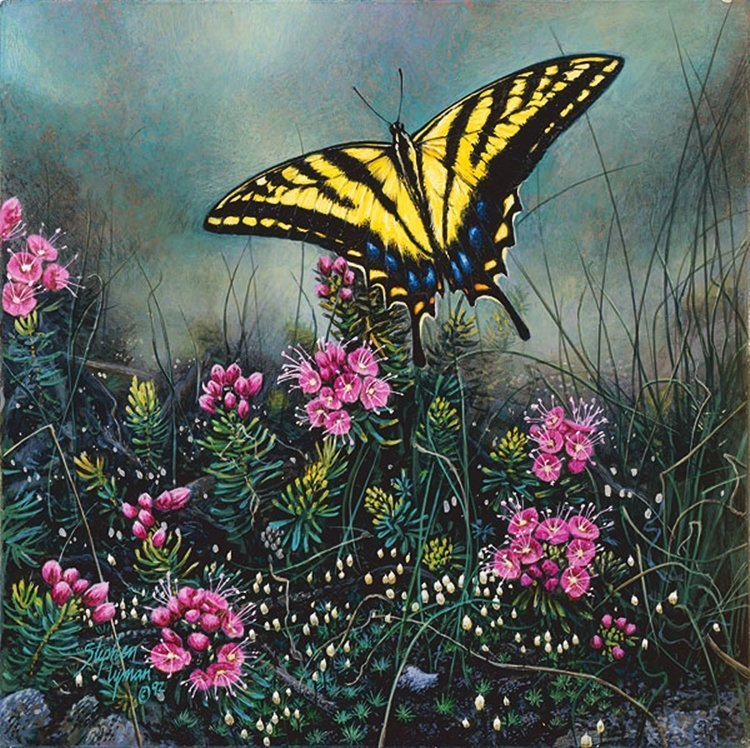 221W: STEPHEN LYMAN - SWALLOWTAIL BUTTERFLY AND PINK MO