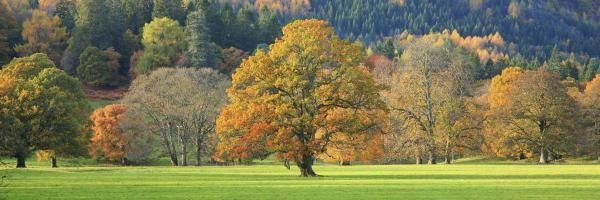UNKNOWN - MIXED TREES IN AUTUMN COLOUR, SCOTLAND -