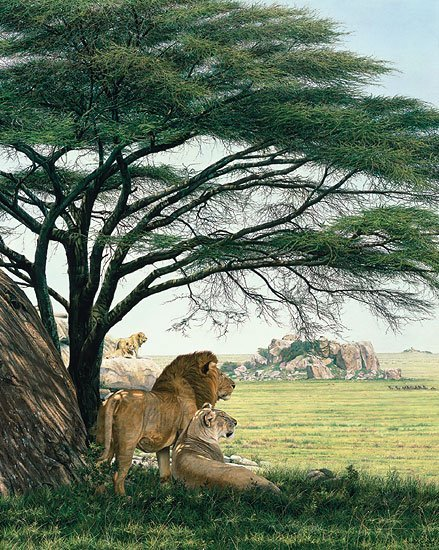 SIMON COMBES - - AN AFRICAN EXPERIENCE