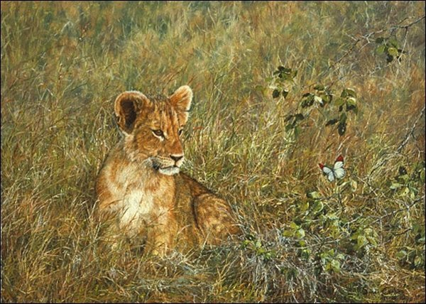 SIMON COMBES - - LION CUB AND BUTTERFLY