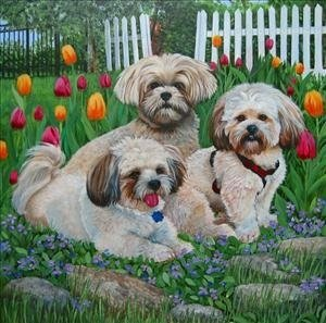 LHASA AND TULIPS