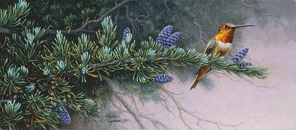 RUFUS HUMMINGBIRD AND MOUNTAIN HEMLOCK - STEPHEN LYMAN