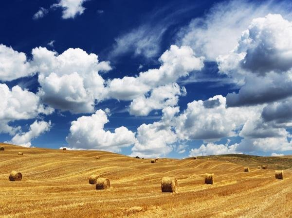 UNKNOWN - BALES IN FIELD, TUSCANY