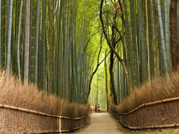 PETER ADAMS - PATH THROUGH BAMBOO FOREST, KYOTO, JAPAN