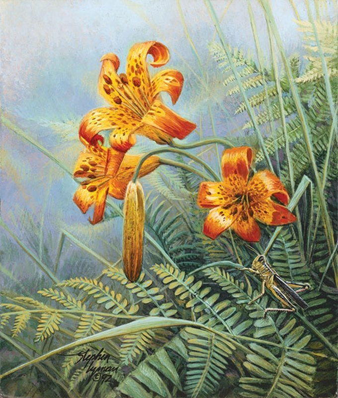 TIGER LILIES AND GRASSHOPPER - STEPHEN LYMAN