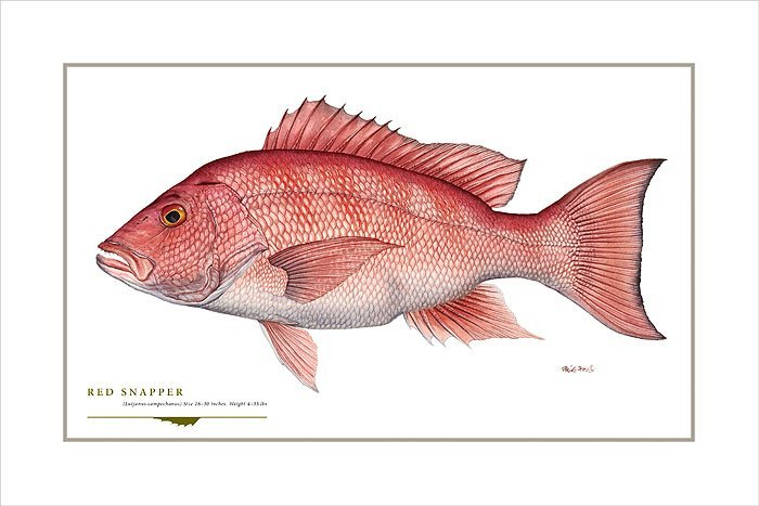 RED SNAPPER - FLICK FORD