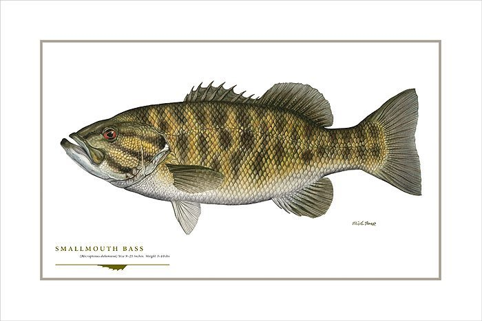 SMALLMOUTH BASS - FLICK FORD