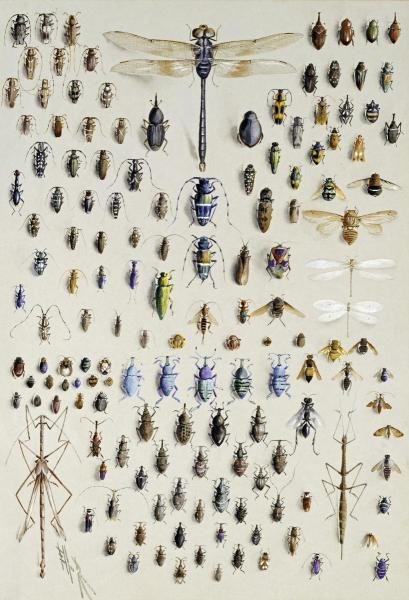 NMARIAN ELLIS ROWAN - ONE HUNDRED AND FIFTY INSECTS