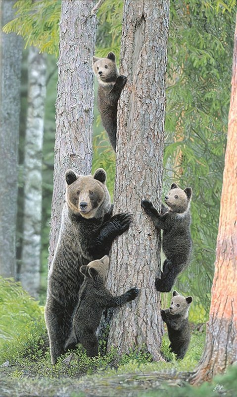 TREE HUGGERS - JOHN BYE