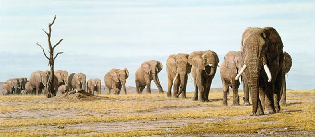 THE LAST ELEPHANTS - SIMON COMBES