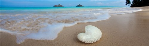 Sean Davey  - Hawaiian Treasure by Sean Davey
