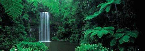 Peter Adams  - North Queensland's Millaa Millaa Falls