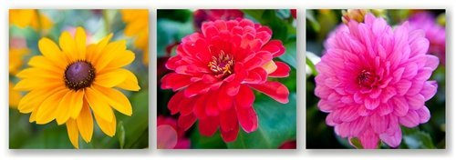 Yellow Red Pink by Doug Cavanah. Three 8x8 images