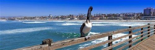 Sean Davey  - Percy The Pelican by Sean Davey