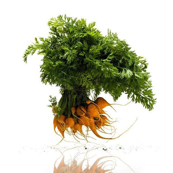Thumbnail Carrots by David Wagner