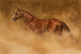Out of the Dust by Robert Dawson
