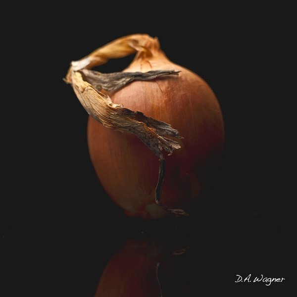 Onion by David Wagner