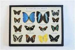 "Mounted ""Butterflies of the Amazon"""