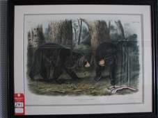241: Audubon Lithograph