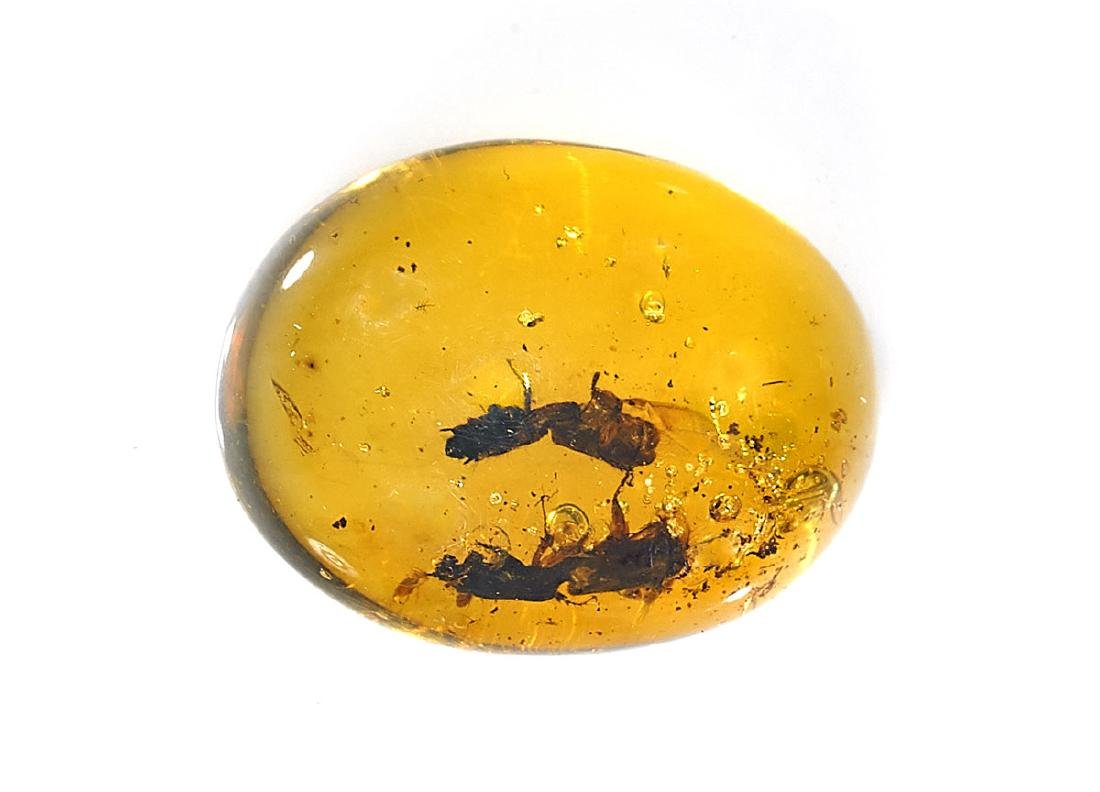 BEETLES IN AMBER