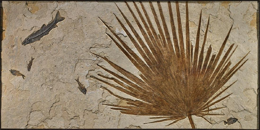 SUPERB FOSSIL PALM MURAL