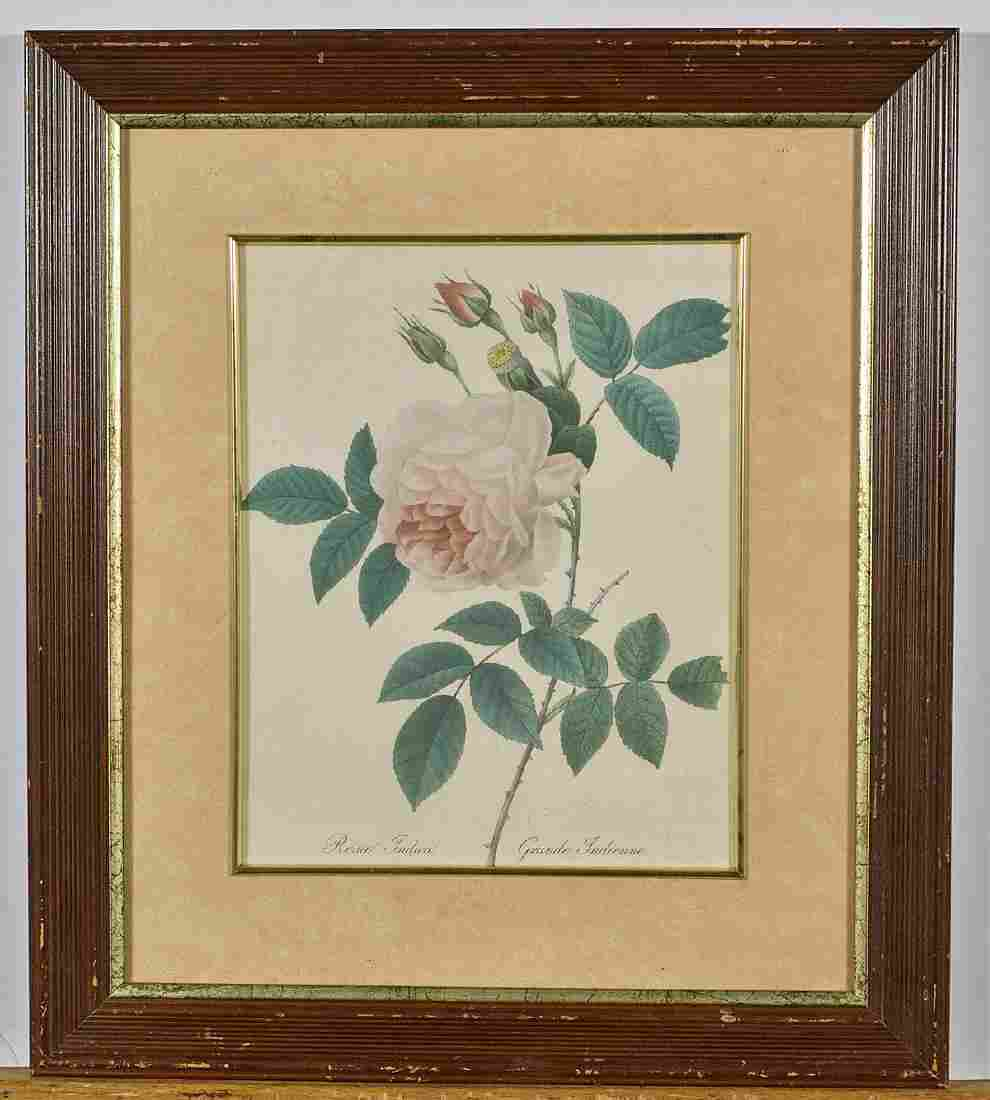 Two Botanical Prints After P.J. Redoute