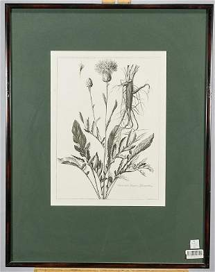 Set of Five Botanical Prints After Nicholas Robert