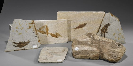 121: Group of Six Various Fossils