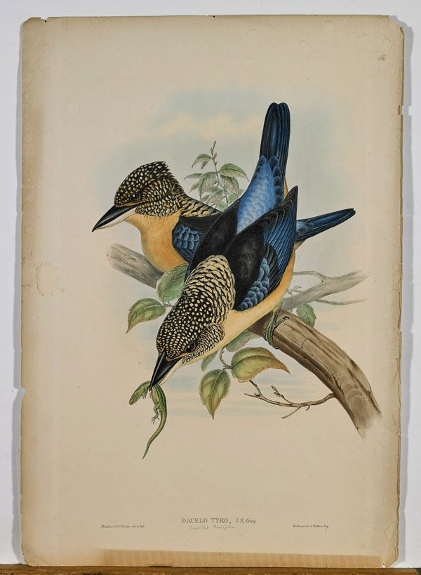 Two Antique English Lithographs by John Gould: Birds