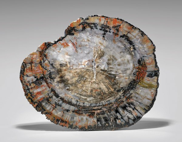 ARIZONA PETRIFIED WOOD SLICE