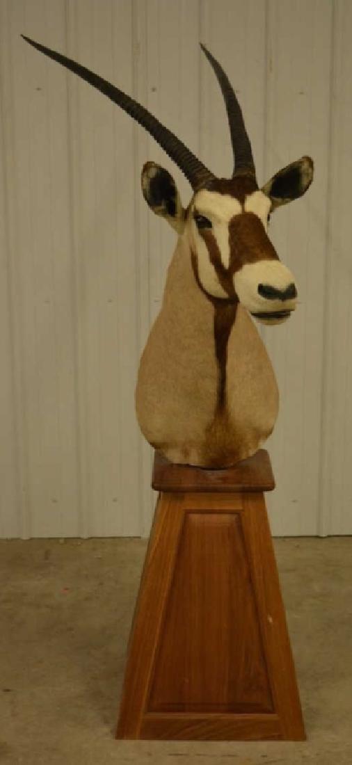 """Oryx Shoulder Mount On Wooden Base-40"""" Horns"""