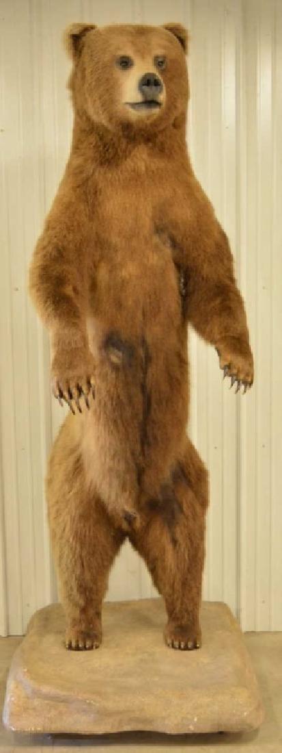 Alaskan Kodiak Bear Full Body Mount